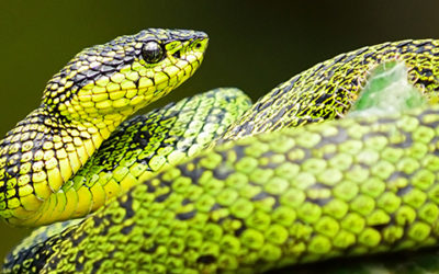 IT'S TIME TO STOP TALKING TO SNAKES